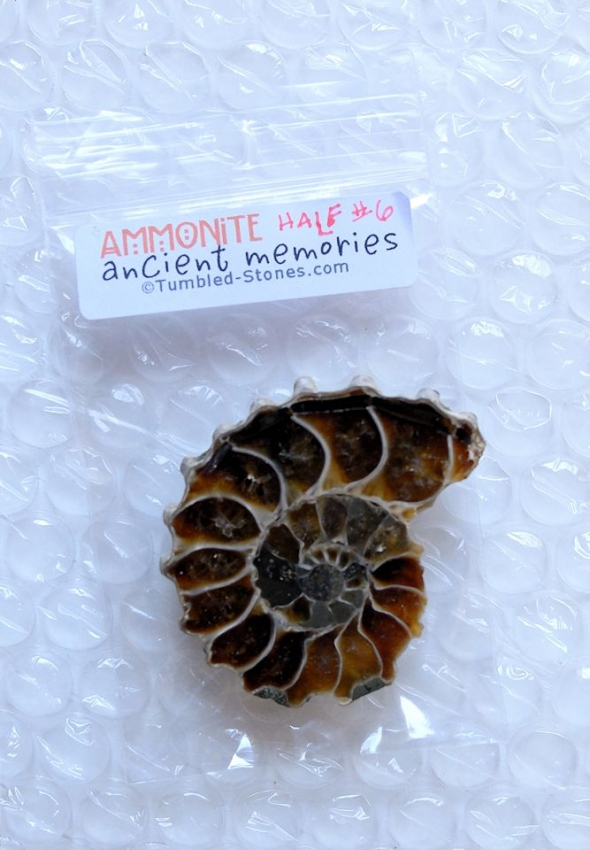 ammonite half #6