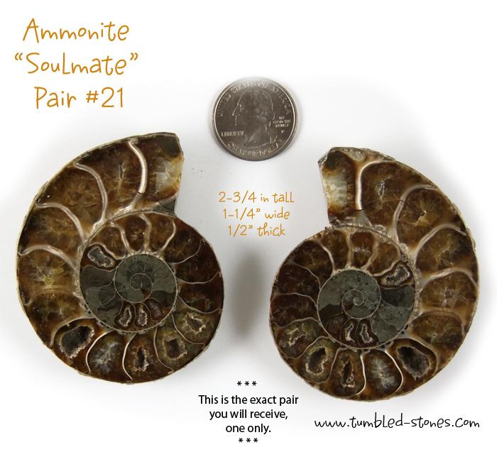 ammonite pair 21-lg