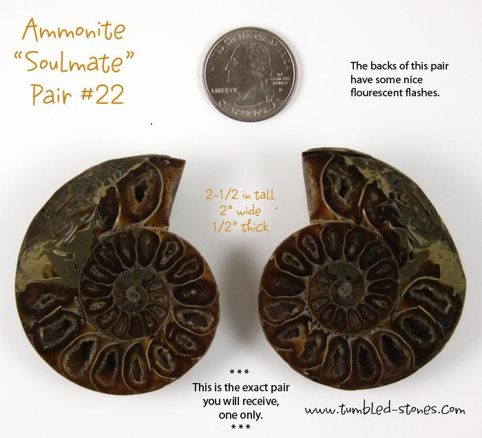 ammonite pairs 22-lg